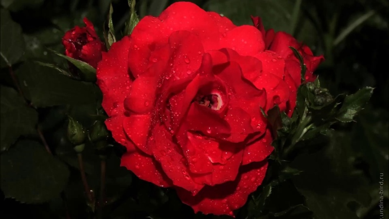 Мощная Проработка и Освобождение Ченнелинг-Медитация Прощения Принятия Себя и Любви к себе
