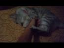 Опасная кошка| Убила руку| Потерял девушку 18
