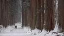神様が宿る雪の戸隠鏡池から奥社参道に・4K撮影