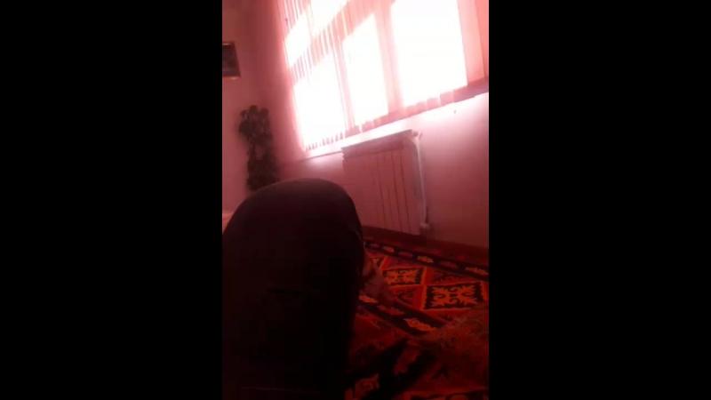 Ислам Али - Live