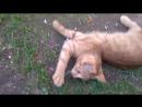 Дача. Кот и мышь
