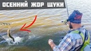 Осенний жор щуки Джиг и крупные твистеры Леонидыч на рыбалке