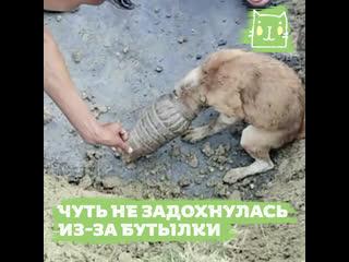 Собака застряла головой в бутылке