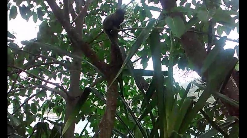 Micos no Rio de Janeiro
