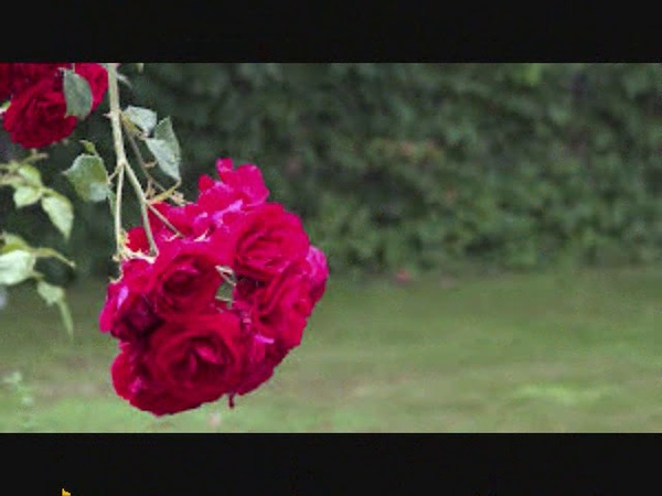 Allah ky nabi sari raat allah ki ibadat karte hain by Qari Muhammad Shafiq Amir