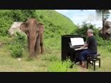 В Таиланде слоны всегда с нетерпением ждут пианиста Пола Бартона