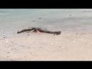 Тело морского чудовища нашли на американском побережье