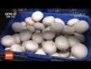 Шампиньоны ''Шуан Бао Гу'' (двуспоровый гриб). Выращивание Шампиньонов на коровьем навозе ''Ню Фэнь ЧжунЧжи'', с использованием