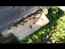12 07 2014 Так работали труженицы пчёлки