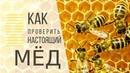 Как проверить мёд | Народный лайфхак