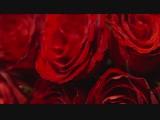 CH Insignia Fragrances - Presented by Carolina Herrera de Baez _ CH Carolina Herrera