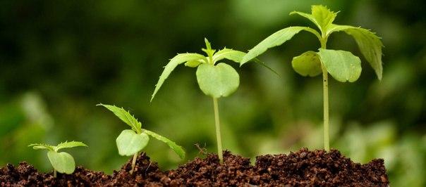 Витамины группы «В» для растений