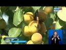Ставрополец превратил заброшенный сад во фруктовый рай. Автор Лана Волкова