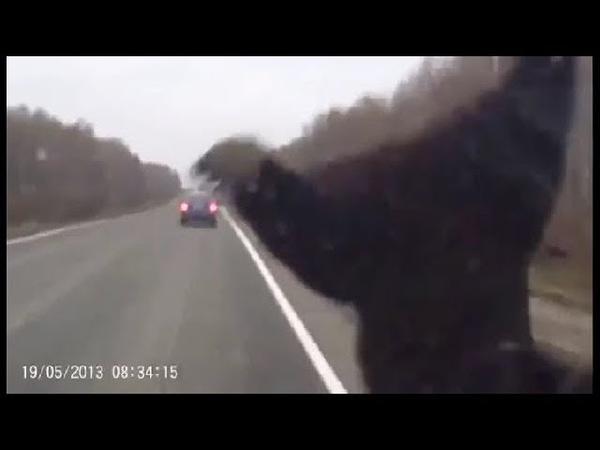 Авария с медведем Сбил медведя на дороге