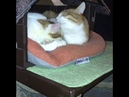 1733). 17.06.2016 и 2504). 19.08.2017 - Кот Луи (теперь Бублик Фомичев) и котик Макс (теперь Блинчик Фомичев) живут дома!