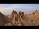 Пустыня. Абу-Даби. ОАЭ. Путешествие