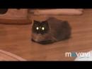 Радиоактивный cat