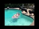 4 минуты смеха! хорошее настроение, юмор, смешное видео, отпад, кошки, кошка плавает, купается, бассейн, рыбалка.
