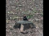 Дятел в парке на Щукинской