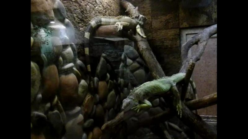 Два маленьких зеленых дракона в Ленинградском зоопарке