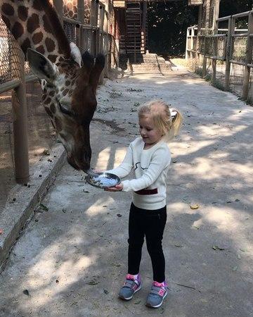 """Ekaterina 💙 on Instagram: """"А вы кормили жирафов? Зоопарк 🐼🐨🐯🦊🦁🐘🦏🦍🦌🐑🐓🐐🐫🐅🐎в Shenzhen просто огромный 😱 и очень ухоженный 🌴🌱🌳... вообщем мы очень впе..."""