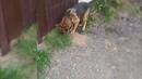 Служебная собака Дора ищет закладки наркотиков