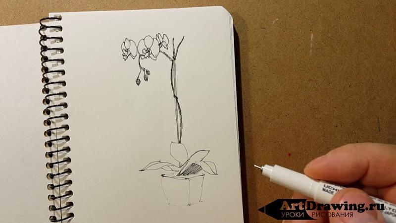 Рисуем скетч линером орхидеи