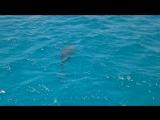 ? ? dolphin !