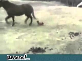 МОИ ЗАБАВНЫЕ ЖИВОТНЫЕ смешные животные