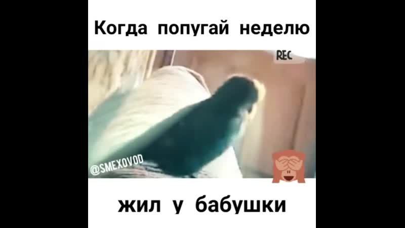 Когда попугай неделю жил у бабушки