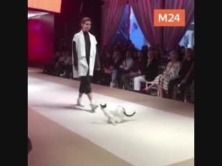 Кот на показе мод