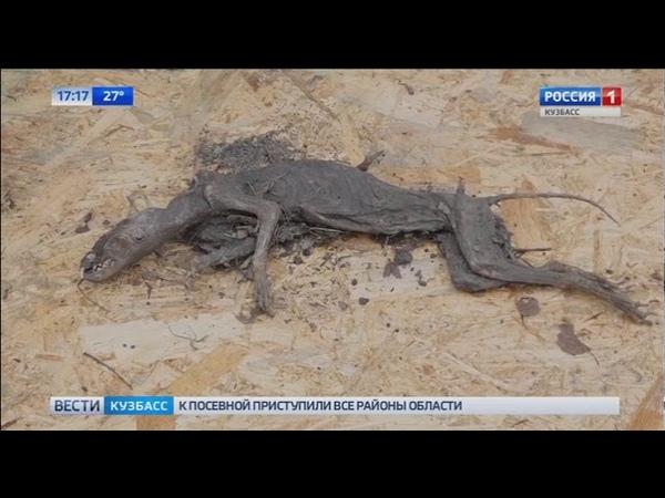 Настоящая Чупакабра: в кузбасском городе обнаружили странное существо