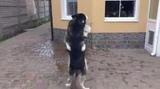 Dogs &amp Kaoma - Lambada #coub, #коуб