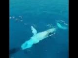 Так люди плавают с китами