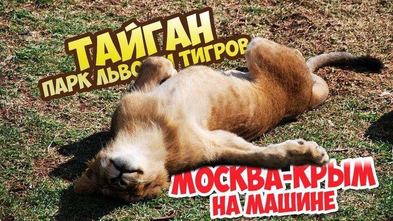 Покусала львица) Тайган - парк львов и тигров. Москва-Крым на машине