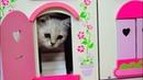 💖 КОТЕНОК БАНТИК 🐈 🏰 ИГРАЕТ В ЗАМКЕ смешные коты и котята 2018 NEW family