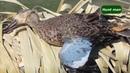 Охота на утку и гуся в Канаде