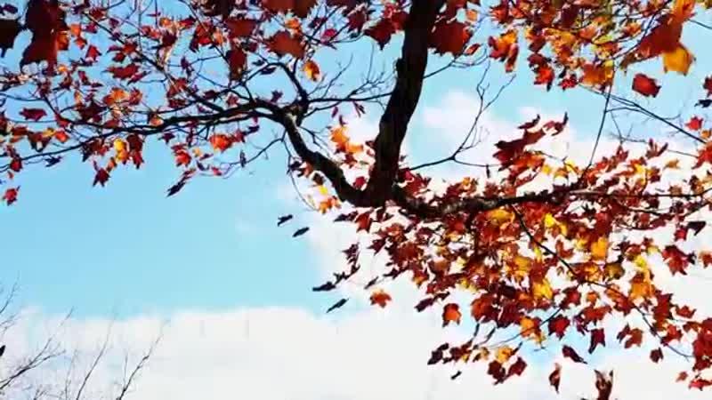 Колыбельная с четырьмя дождями (музыка С. Пожлакова, слова Л. Лучкина)