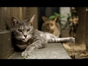Кошки | Джуманджи. Животные в мегаполисе