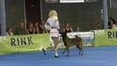 Dogdance World Championship. Freestyle. Polina Ilina and Sabur. The Moldavian dance.