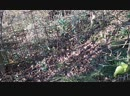 Чёрный кот загнал Морти на древо