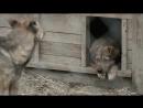 BlagoSGS. Социальный ролик в защиту животных