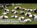 Back To School Day: The Most Adorable Freshmen You'll Ever See | iPanda