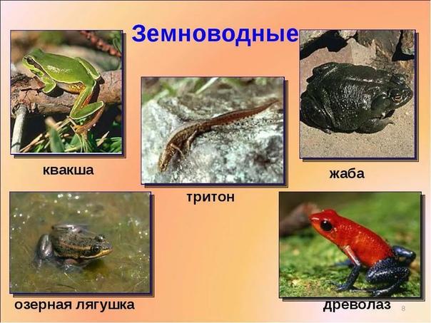 Разница между земноводными и рыбами Рыбы и земноводные в системе биологической классификации являются классами (или парафилетическими группами), входящими в более высокую таксономическую группу