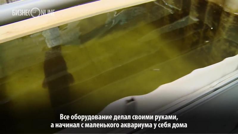 Бизнес на селе: в Татарстане выращивают рыб, которые могут ползать по земле и жить без воды до двух дней