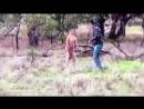 бой с кенгуру за жизнь собаки