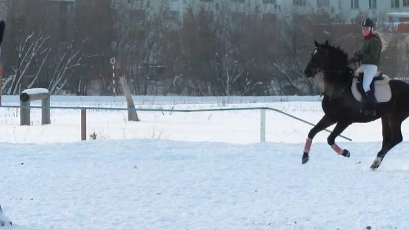 Crazy horse Barsik