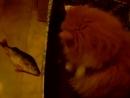 моя любимая киса играет с рыбкой=)