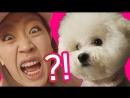 Корейская собака которая смотрит порно??