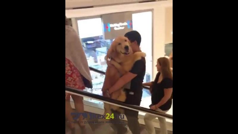 Этот хозяин готов носить своего пса на руках